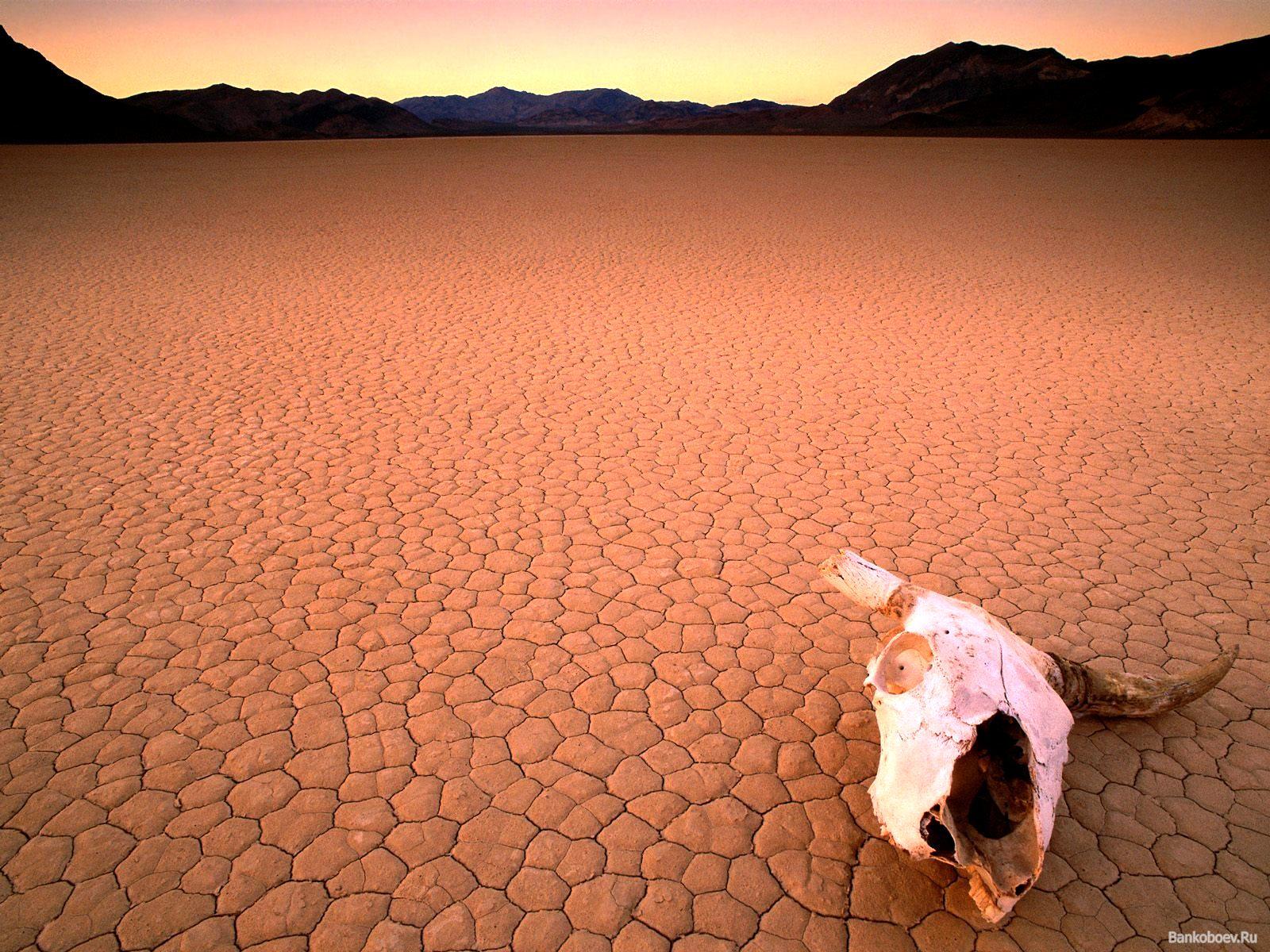 Wüstenei
